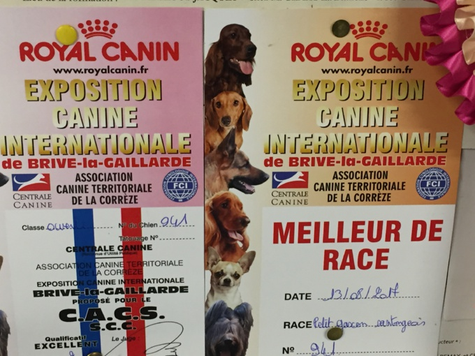 Exposition Canine Brive
