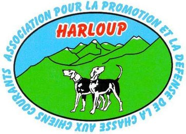 Harloup chiens courants
